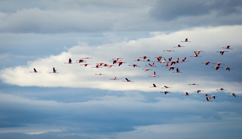 14 Flamencos in the sky