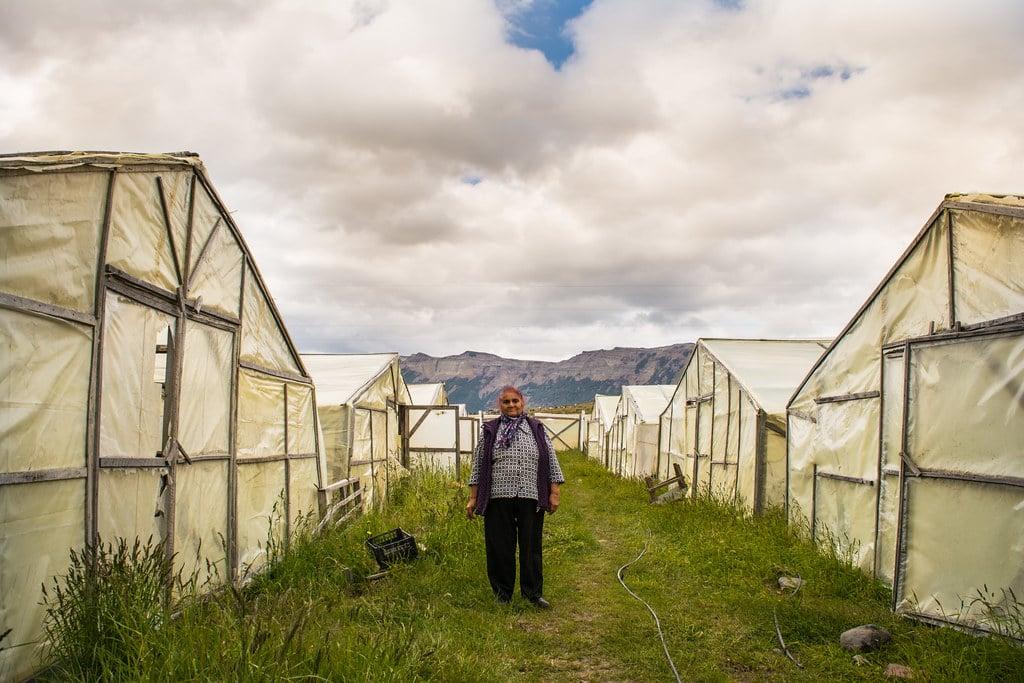 Farm near Puerto Natales