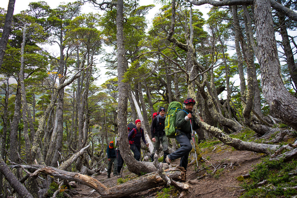 First steps in the lenga forest