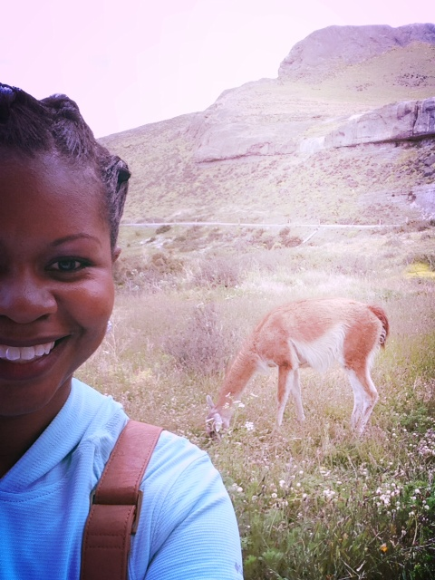 Meeting the guanacos...