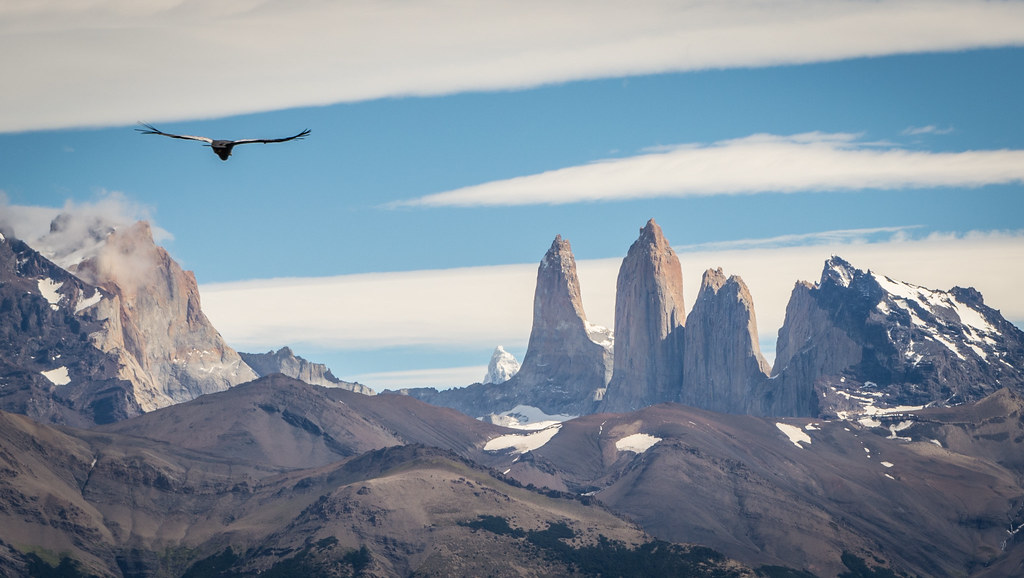 Wait for the condor and you might get the picture of year!