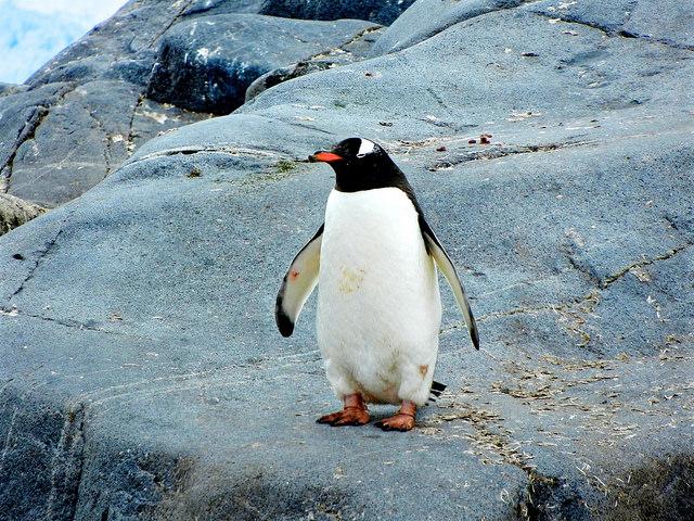 Penguin Patagonia