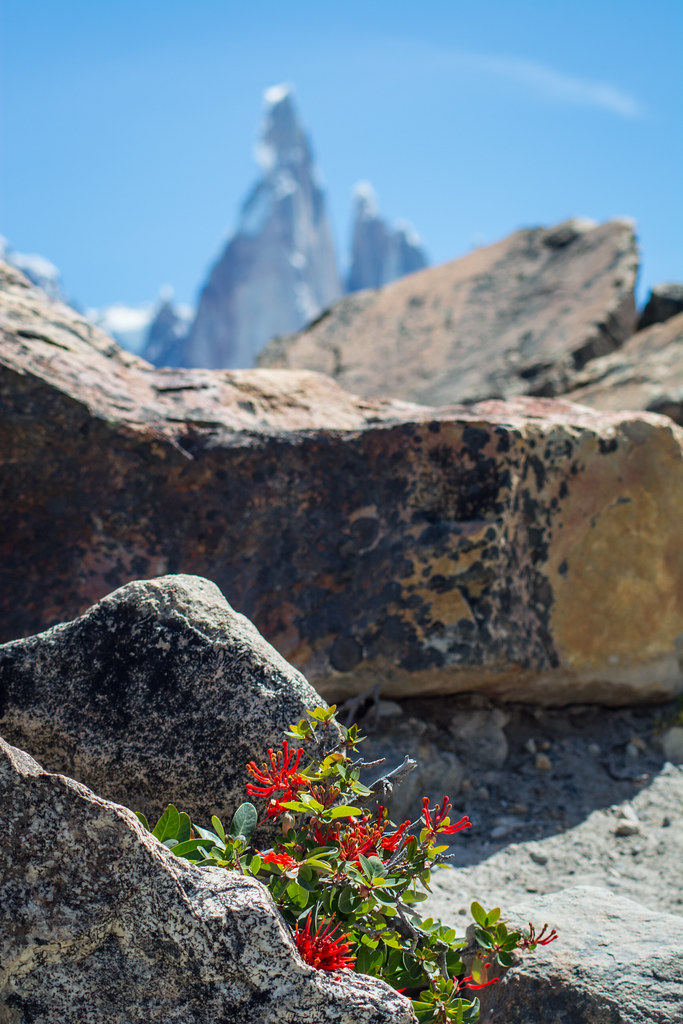 Blossoming in the heart of Patagonia