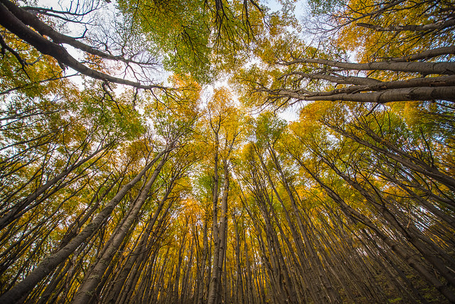 Trees Patagonia