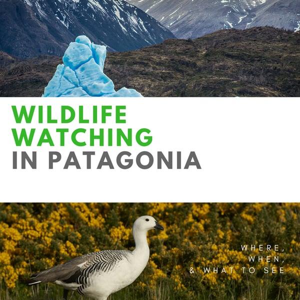 Wildlife Watching in Patagonia