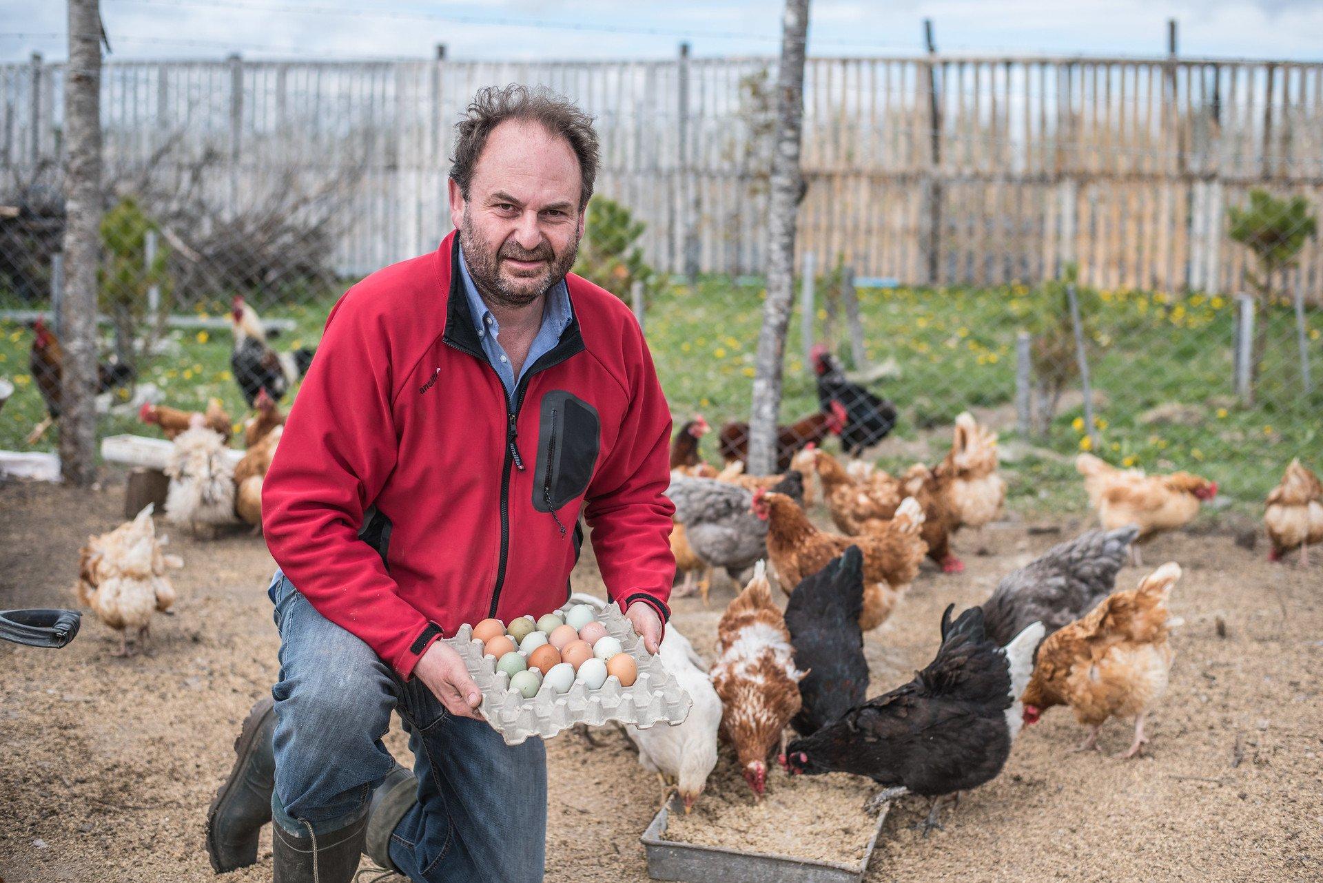Happy chicken eggs supplier