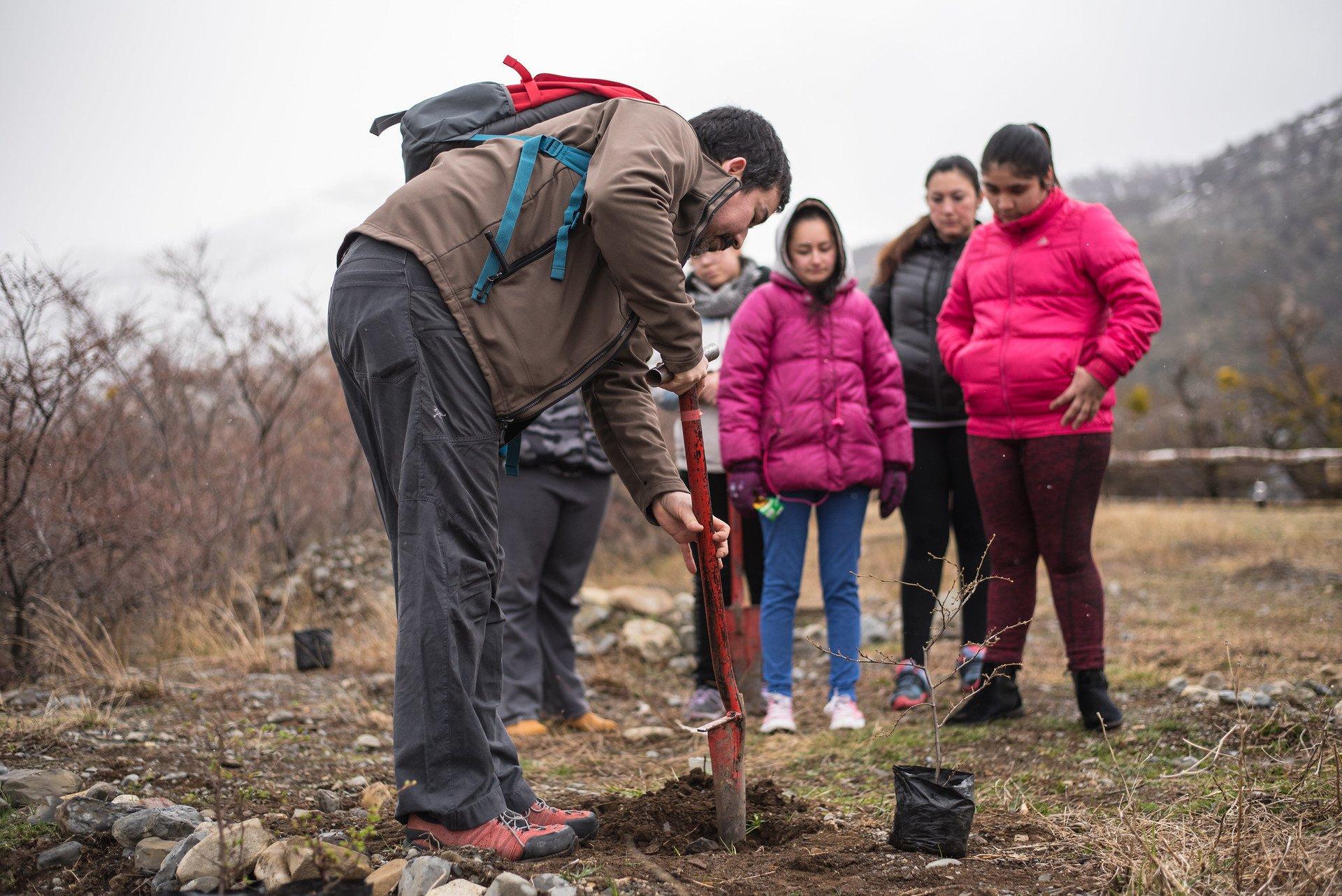 Reforesting Torres del Paine Park