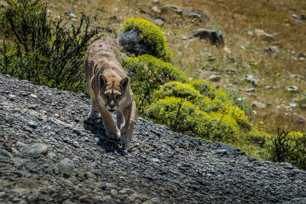 wildlife watching in patagonia