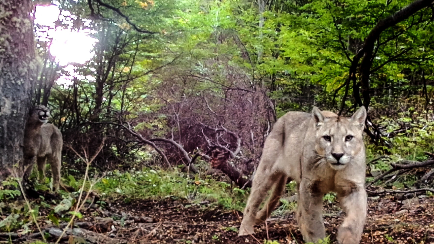 Camera Traps Patagonia